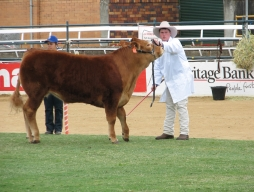 Ekka Highlights