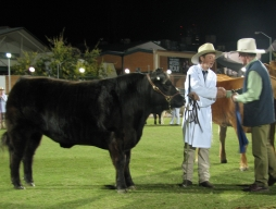 Ekka success at cattle exhibit